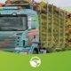 transporte de madeira